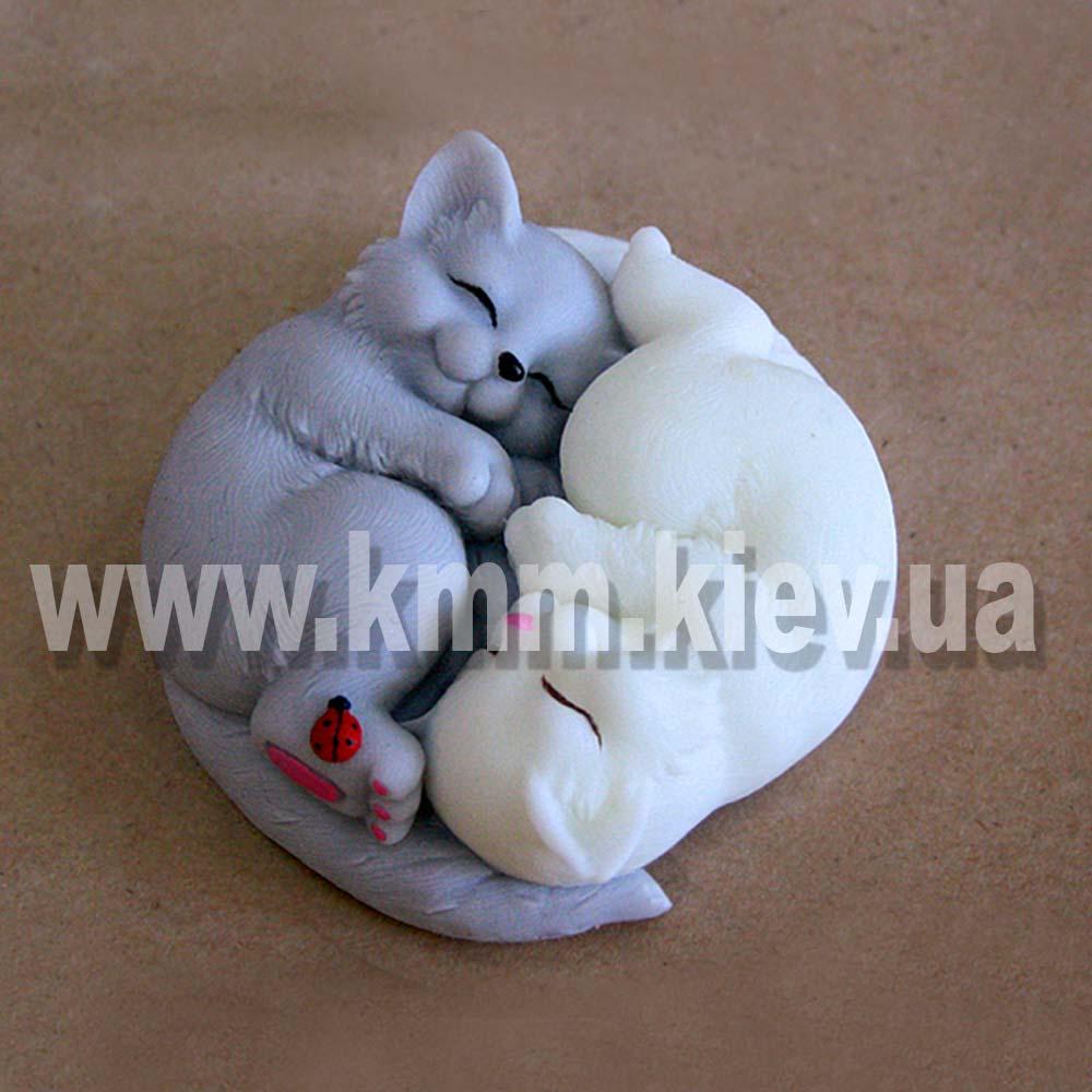 Котики Инь и Янь