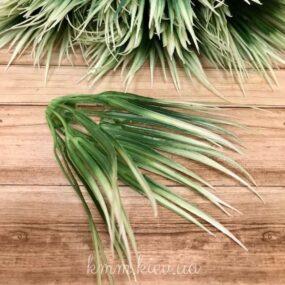 Декоративная добавка-трава